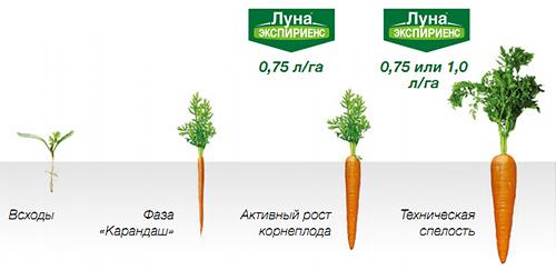 Применение на моркови